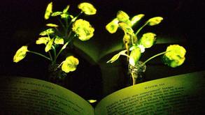 İşte ışık saçan bitki!