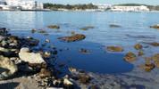 Okyanusları temizlemek adına bakteriler üretildi!