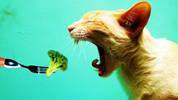 Dünyanın en komik hayvanları!