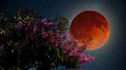 Tüm çıplaklığıyla Kanlı Ay Tutulması!