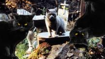 Hayvan Mezarlığı filminden ilk tanıtım geldi!