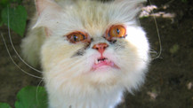 Kediler her yere sığabilirler!