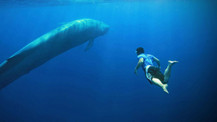 Mavi Balina oyunu için ne tür önlemler alınıyor?