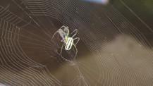 Oldukça ilginç bir örümcek türü keşfedildi!