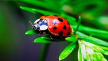 Böcek türlerinin yüzde 40'ı tehlikede!