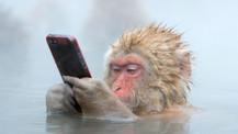 Gen düzenleme tekniği ile zeki maymunlar üretildi!