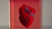 3D yazıcı ile insan dokusu kullanılarak 'kalp' üretildi!
