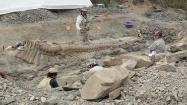 130 milyon yıllık dinozor fosili bulundu!