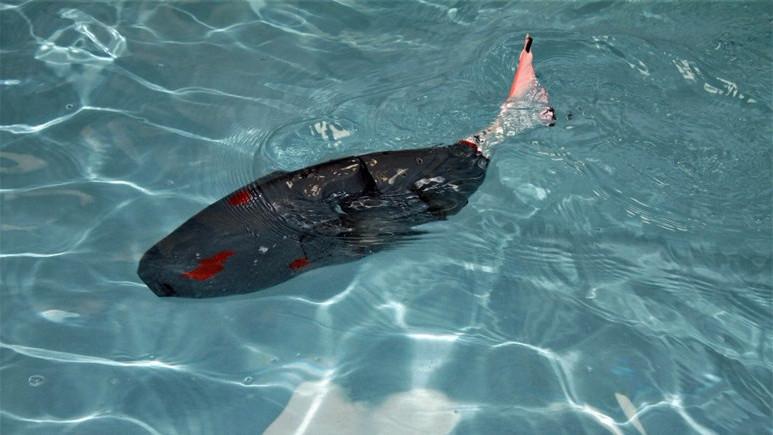 Kaşif akıllı robot balık!