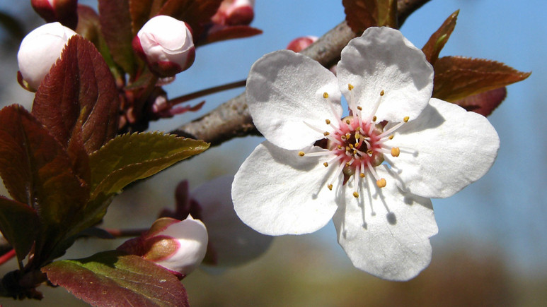 İlkbahar Ekinoksu nedir? Neden Doodle oldu?