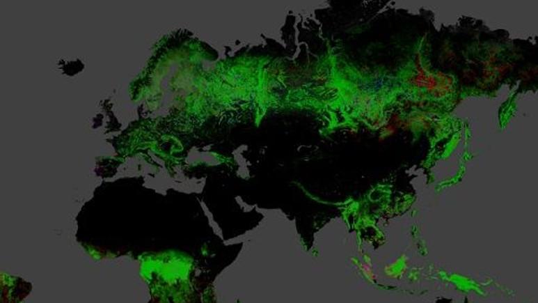 Dünyanın ormansızlaşma haritası yayınlandı!