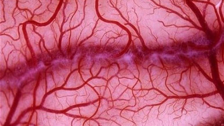 Vücudumuzdaki damarların hayrete düşüren uzunluğu!