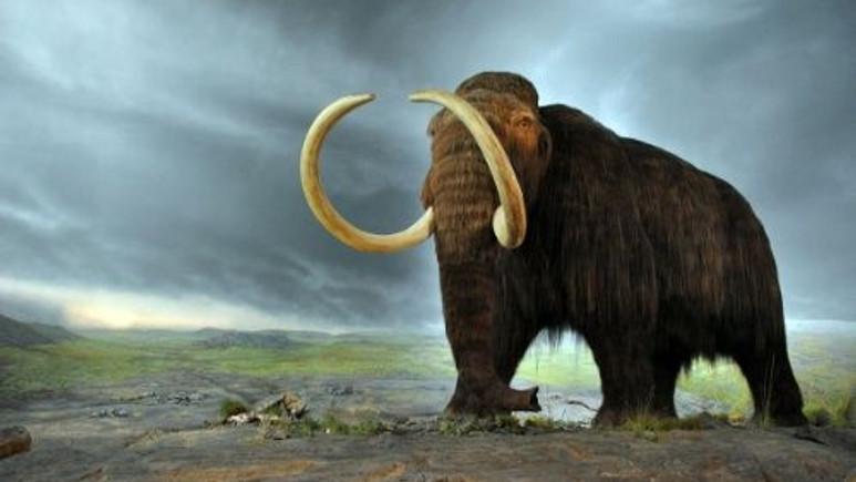 40.000 yıllık Mamut  klonlanacak mı?