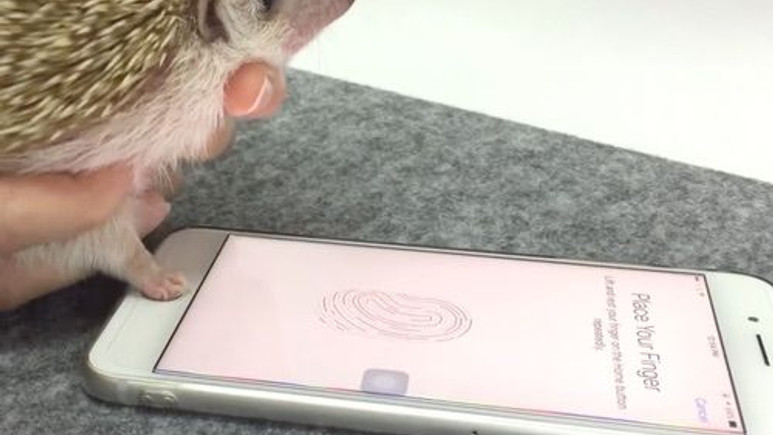 iPhone, kirpinin parmak izini bile okuyor!