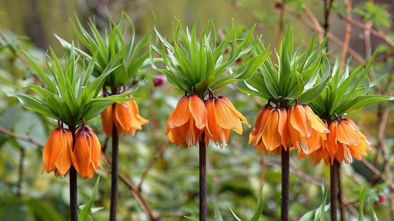 Türkiye'den 5 yeni bitki türü!