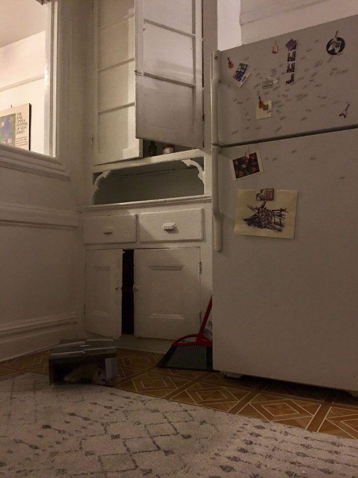 10 saniye içinde kayıp kedi Pierogi'yi bulabilecek misiniz? - Page 1