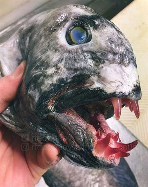 Rus bilim insanının twitter hesabında paylaştığı olağanüstü deniz canlıları - Page 1
