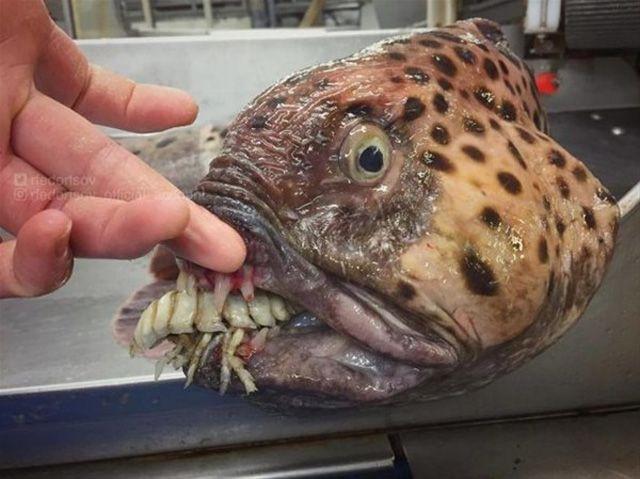 Rus bilim insanının twitter hesabında paylaştığı olağanüstü deniz canlıları - Page 3