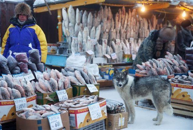 Eksi 64 derecede yaşayan Yakutsk kenti sakinleri - Page 1