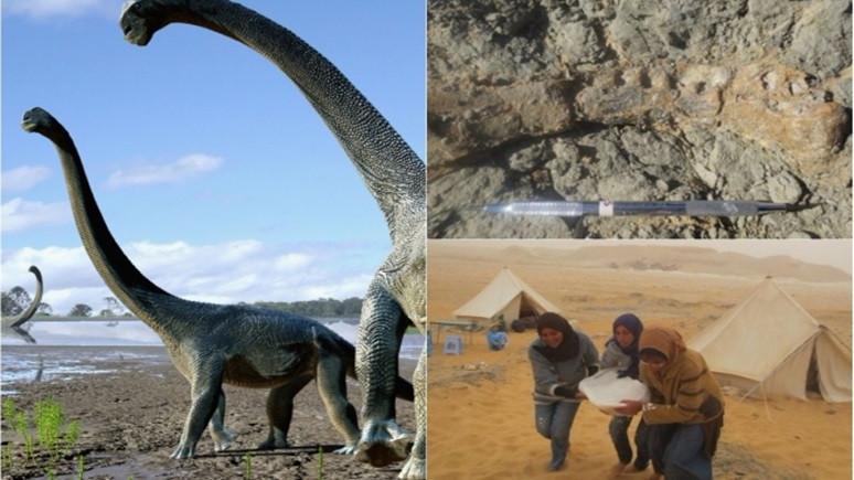Yeni bir dinozor türü!