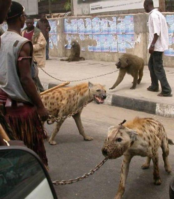 İşte sadece Afrika'da görebileceğiniz kareler - Page 3