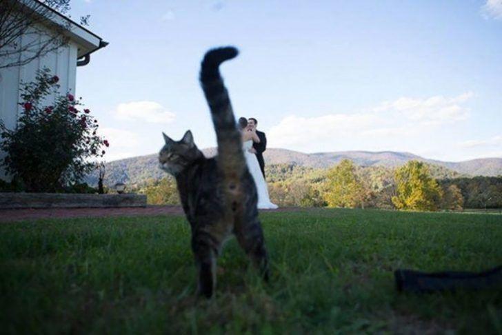 Fotoğrafları trolleyen kediler - Page 2