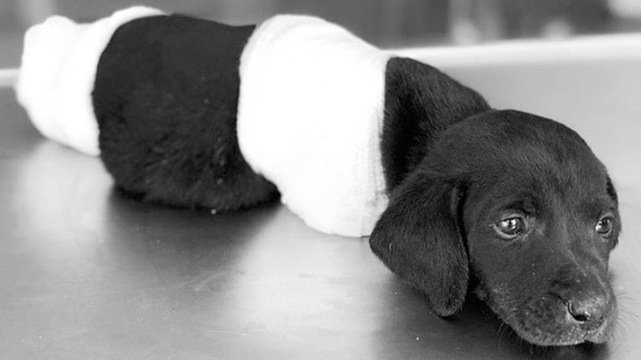 Köpek yavrusuna yapılanlar sosyal medyada tepki çekti