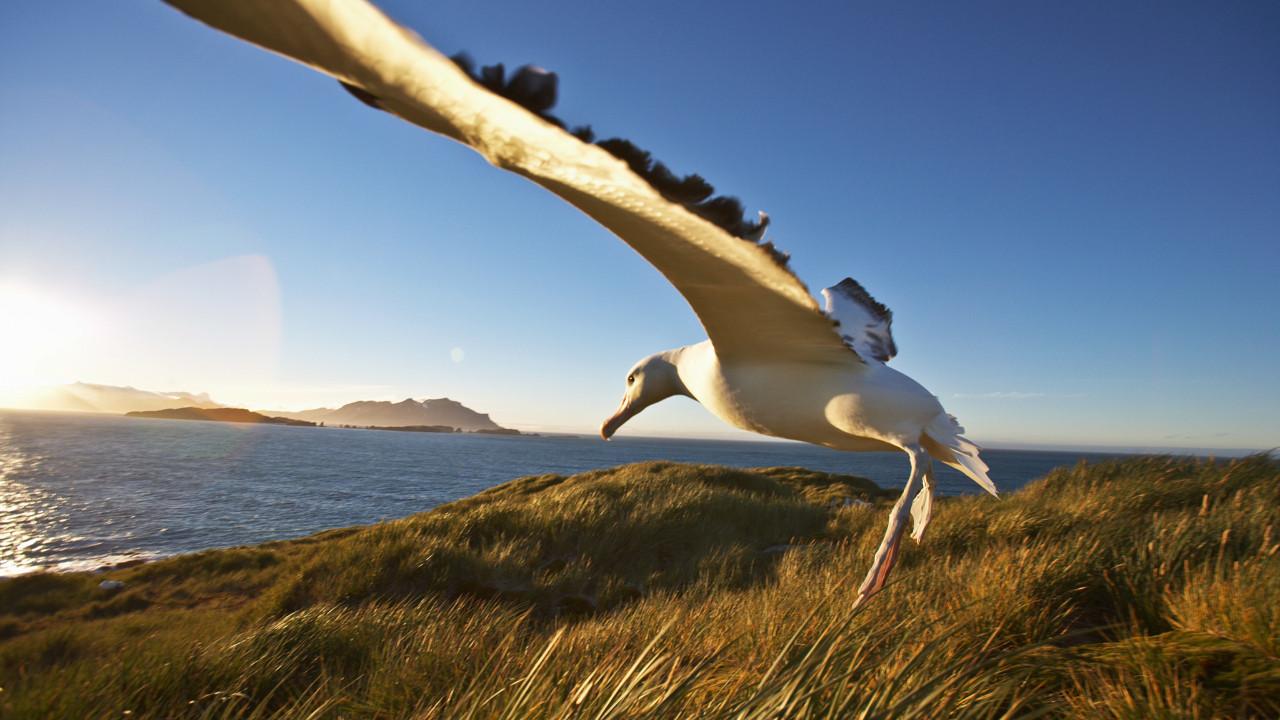 Dünyanın en büyük kuşu ile tanışın!