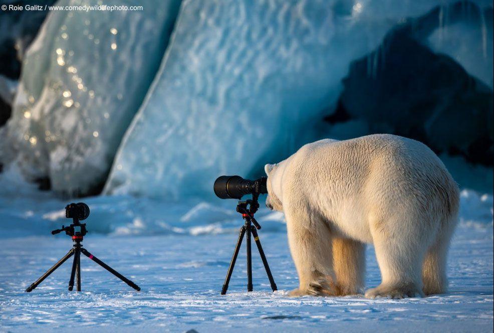 Vahşi doğadan en komik hayvan fotoğrafları - Page 2