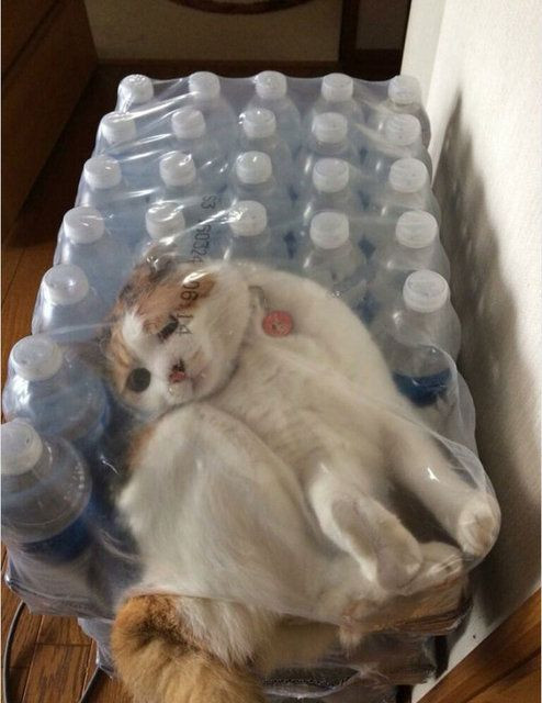 Kediler her yere sığabilirler! - Page 1