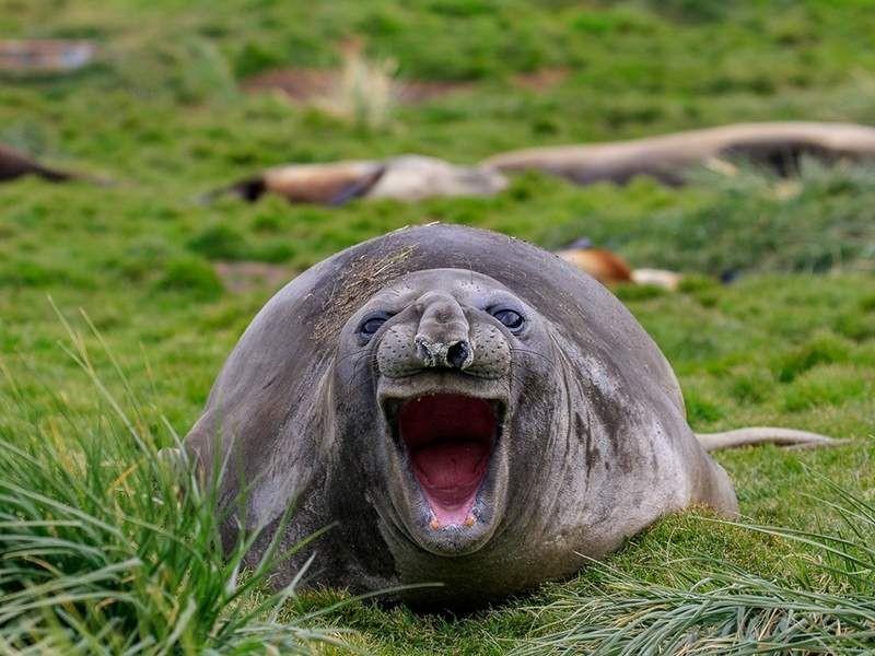En komik doğa fotoğrafları! - Page 3
