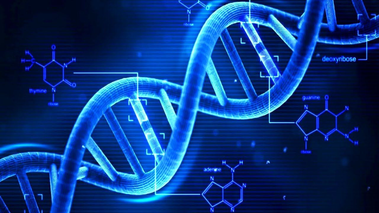 DNA testleri Black Friday kapsamında indirime girdi!