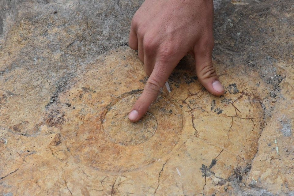 Adıyaman'da 65 milyon yıllık fosil rezilliği! - Page 1
