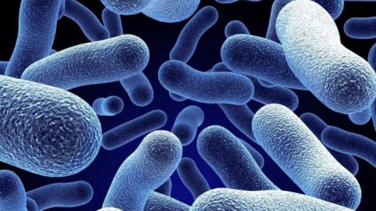 Bakteriler hakkında şaşırtan açıklama!