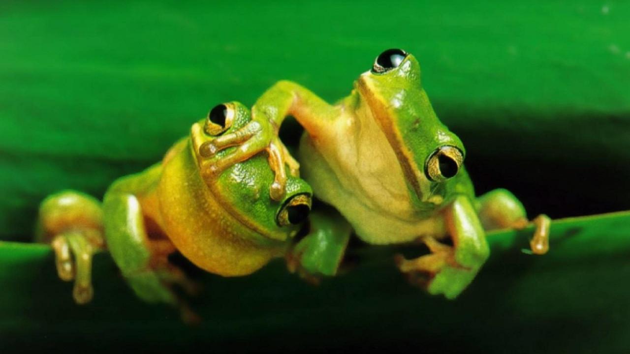 Madagaskar'da 5 yeni kurbağa türü keşfedildi!