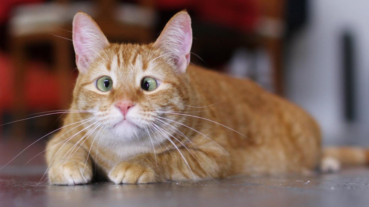 Bilim insanları: Kediler yok edilmeli!