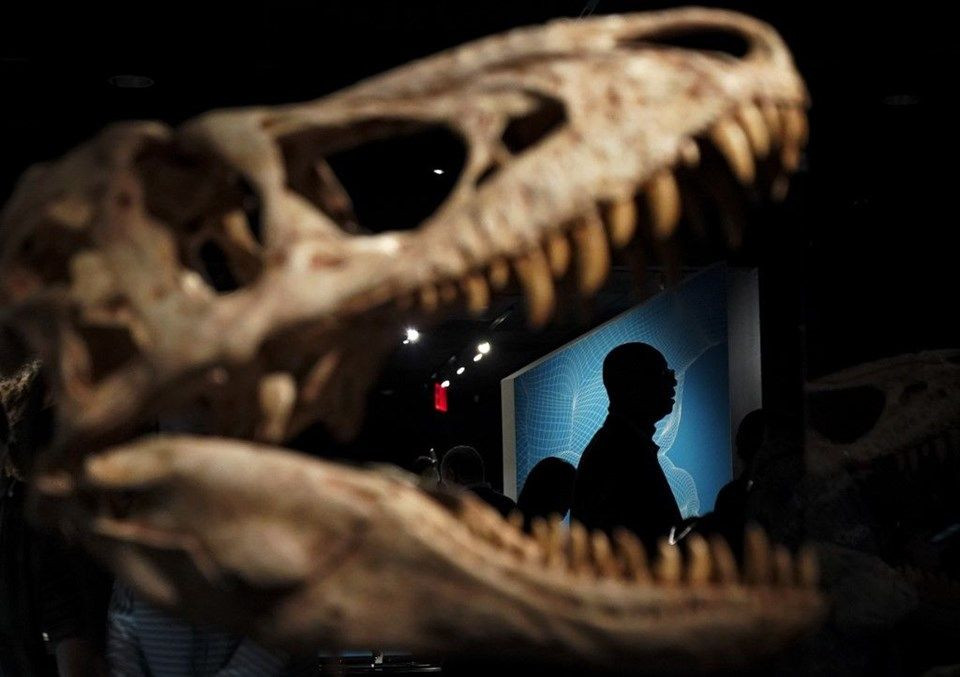 Tek yavru T-Rex fosili satışa çıktı! - Page 1