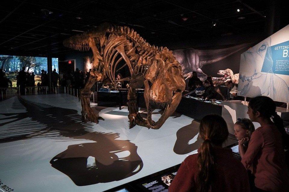 Tek yavru T-Rex fosili satışa çıktı! - Page 2
