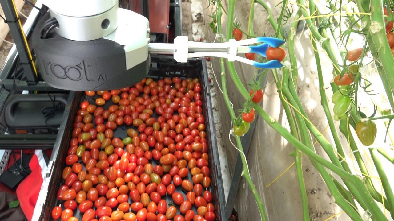 Domates toplayabilen yapay zekalı robotik kol: Virgo 1
