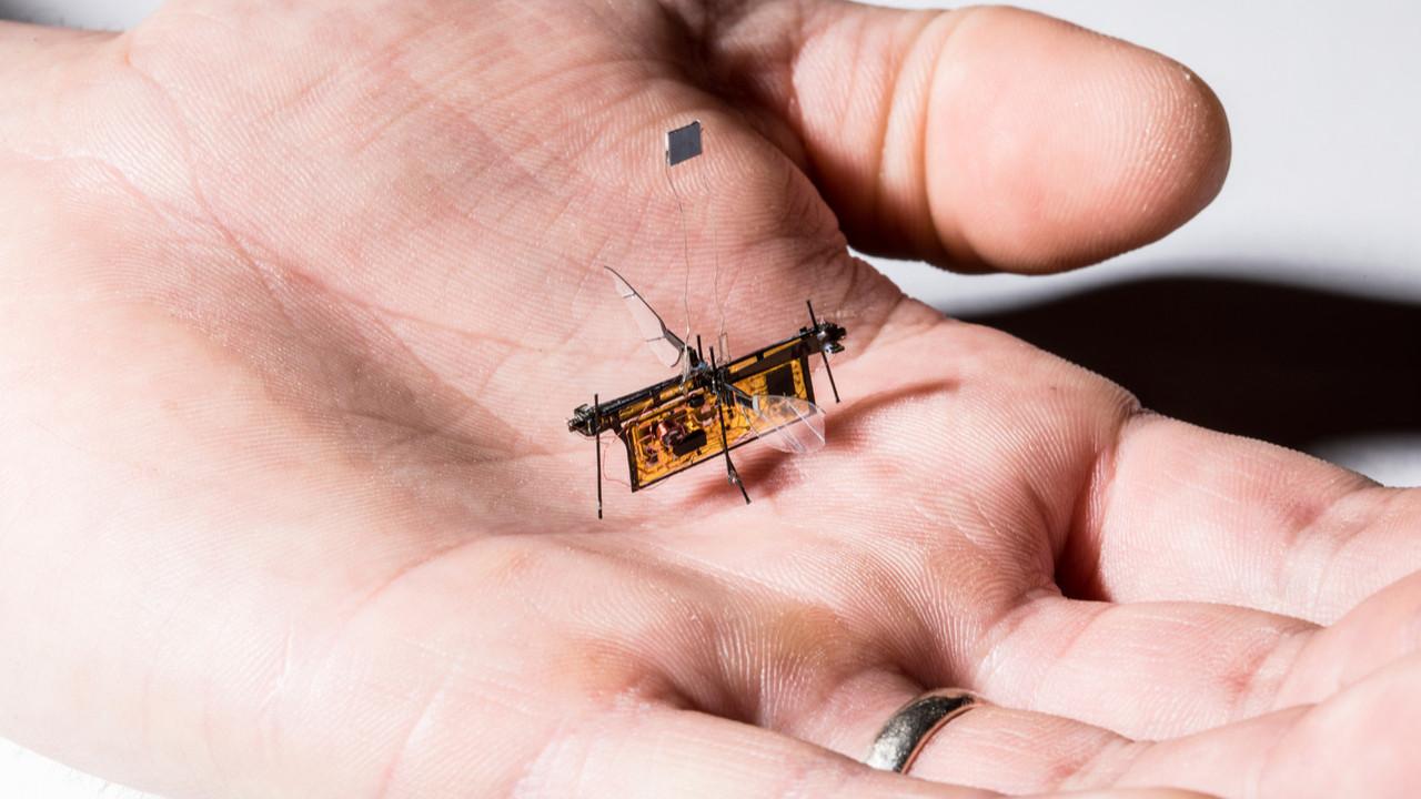 Güney Kore hayvan görünümünde askeri robotlar geliştiriyor