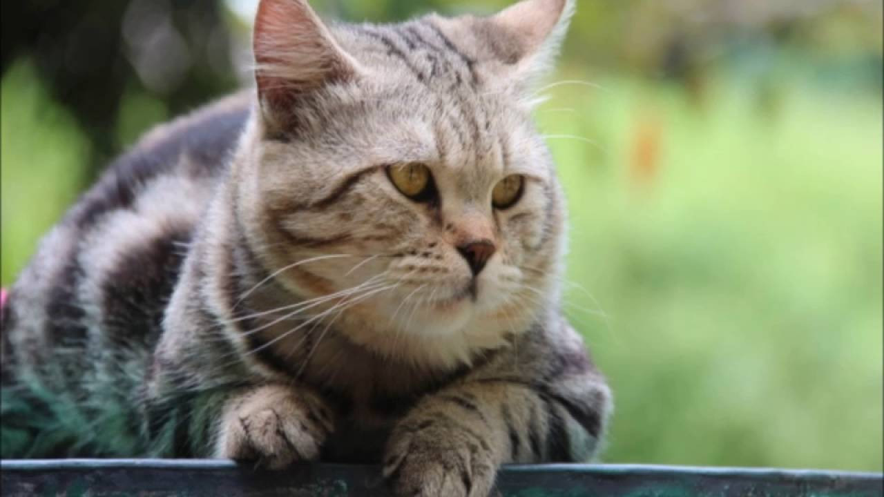 Fenomen kedi trafik kazasında öldü!