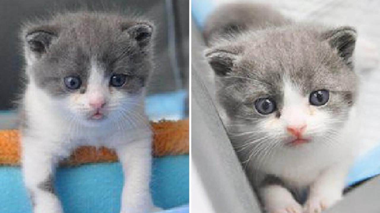 Çin'in ilk klonlanmış kedisi 'Garlic' doğdu