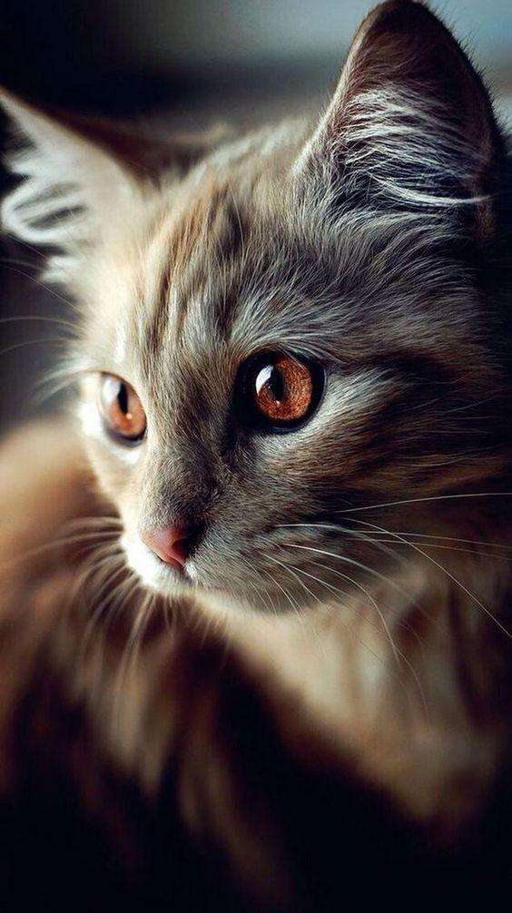 Kedi severler için derlediğimiz birbirinden güzel duvar kağıtları! - Page 2