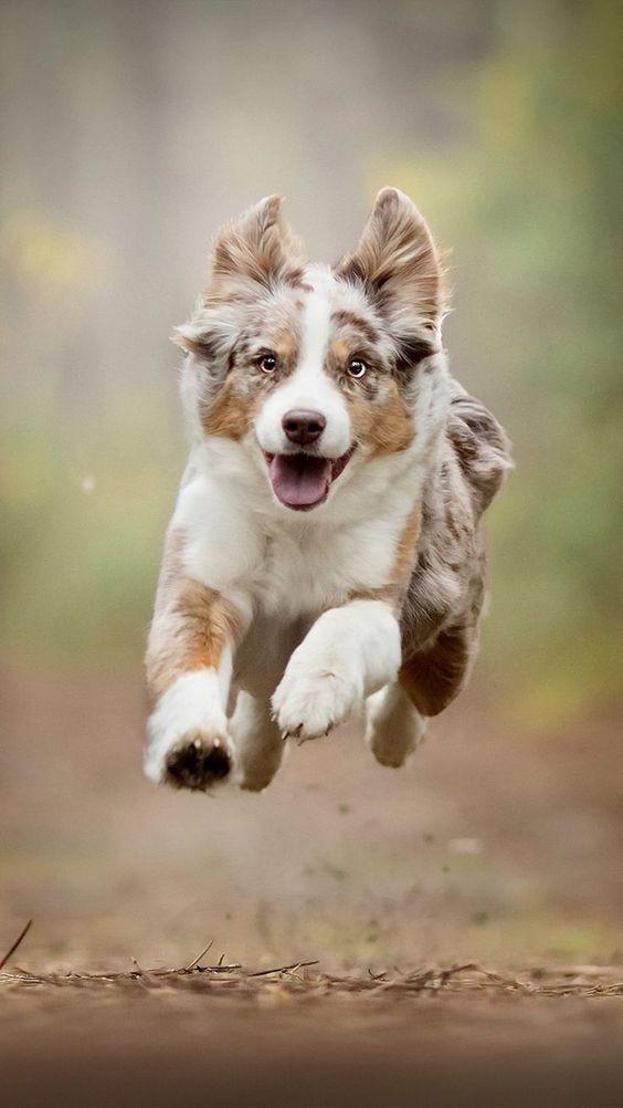 Köpek severler için derlediğimiz birbirinden güzel duvar kağıtları! - Page 1