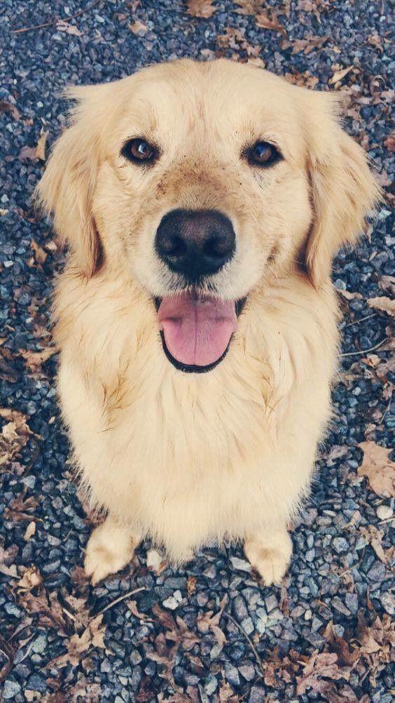 Köpek severler için derlediğimiz birbirinden güzel duvar kağıtları! - Page 4