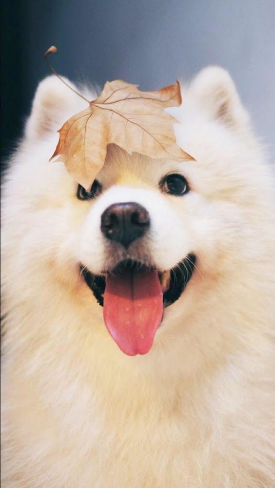 Köpek severler için derlediğimiz birbirinden güzel duvar kağıtları! - Page 3