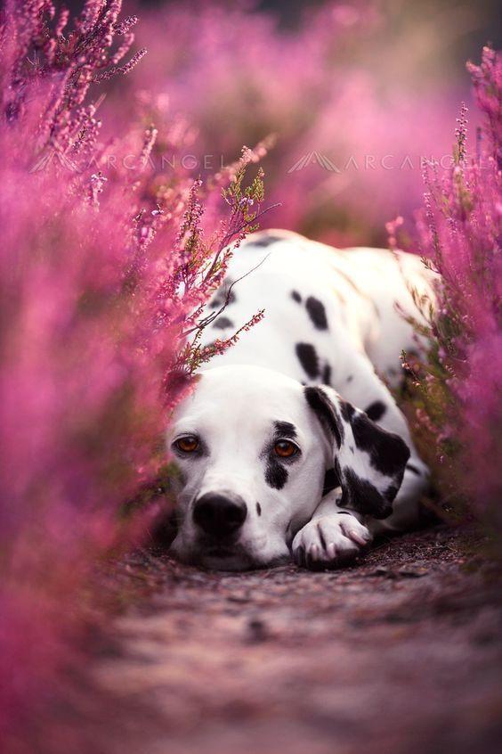 Köpek severler için derlediğimiz birbirinden güzel duvar kağıtları! - Page 2