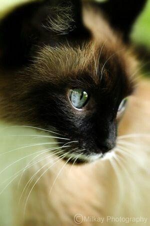 Kedi severler için derlediğimiz birbirinden güzel duvar kağıtları - Page 2