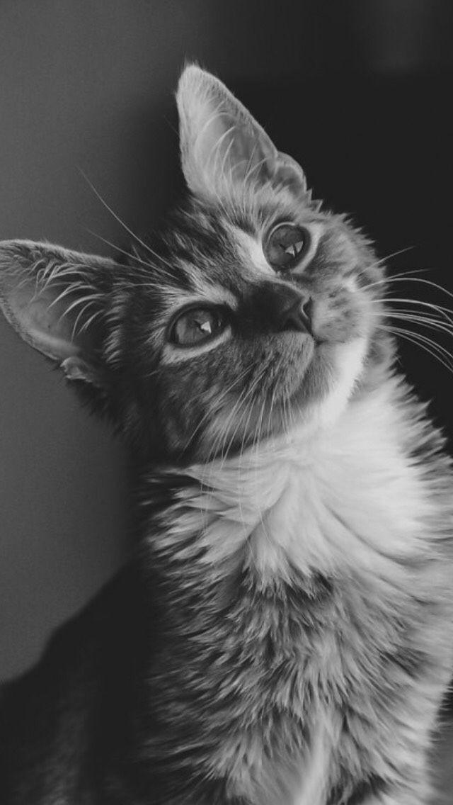 Kedi severler için derlediğimiz birbirinden güzel duvar kağıtları - Page 3