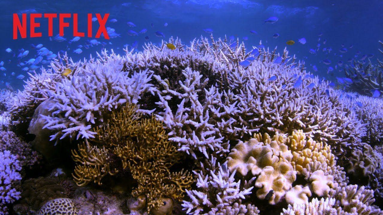 Netflix belgesel önerileri! Farklı türlerde 15 içerik! - Page 1